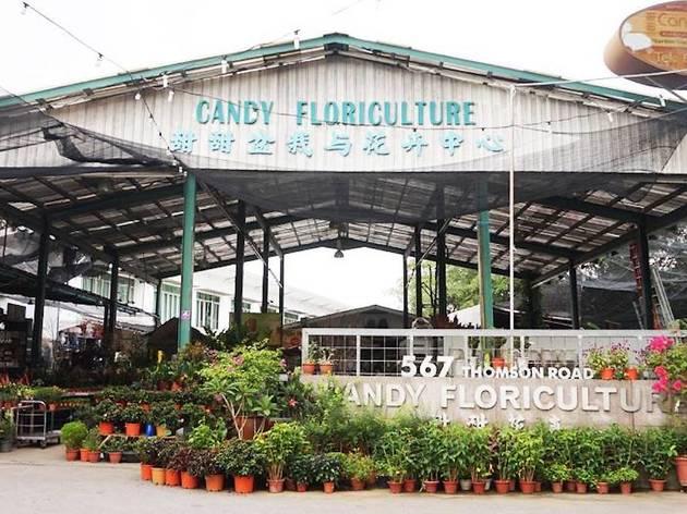 Candy Floriculture shop
