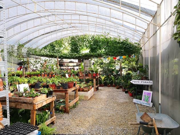 House of Plants greenhouse