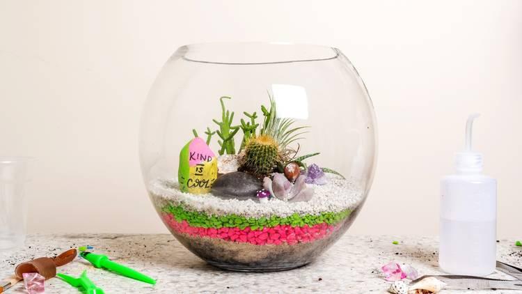 DIY terrarium kit from Little Succers