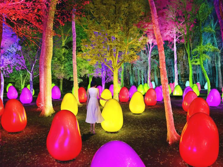 カラフルに光る幻想的な森へ、東所沢公園にチームラボの新作が登場