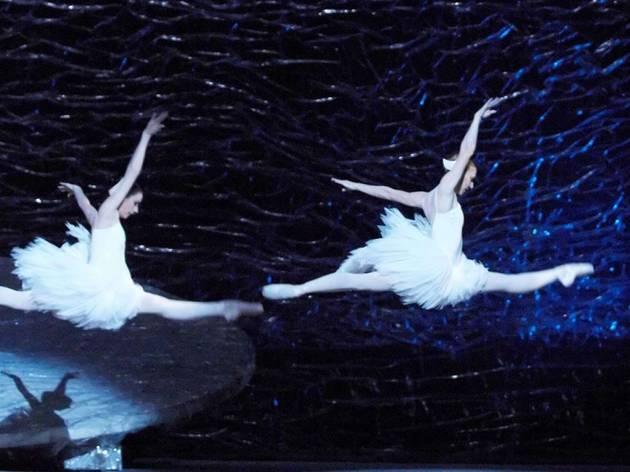 Graeme Murphy's Swan Lake 2008