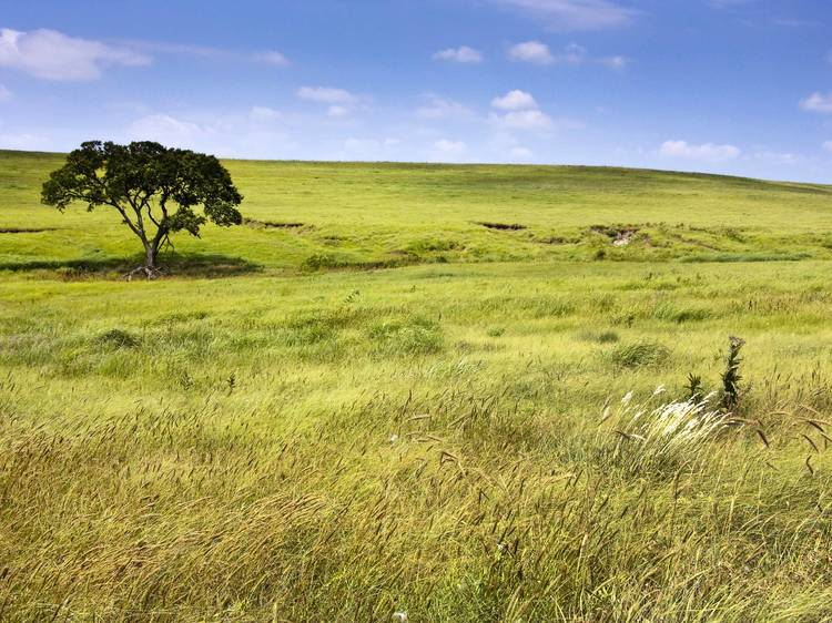 Kansas: Walk through Tallgrass Prairie National Preserve