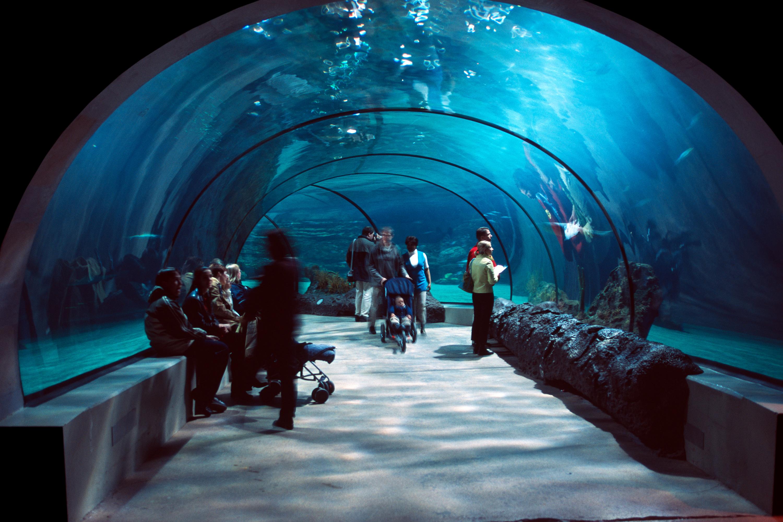 ชวนไปเดินชมโลกใต้น้ำกับ 5 อควาเรียมในเมืองกรุงฯ และใกล้เคียง