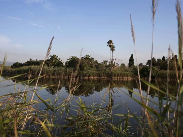 Observad los pájaros del Delta del Llobregat