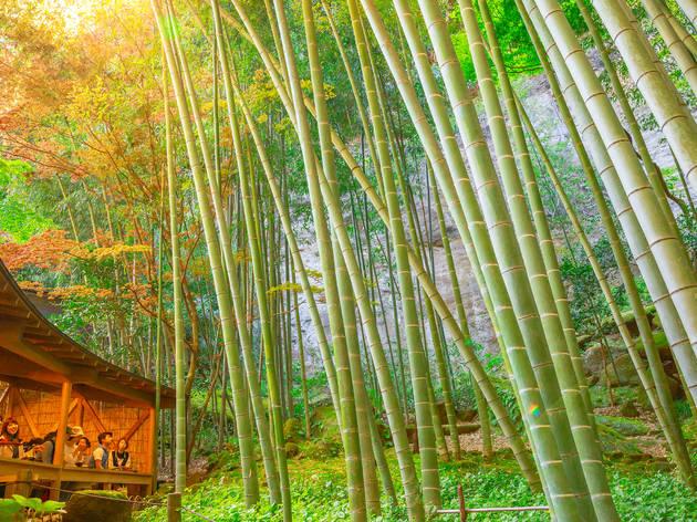 Houkokuji Temple, bamboo garden