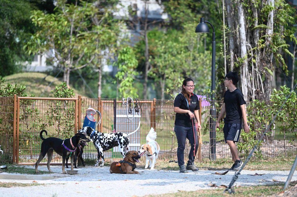 Jurong Lake Gardens, dog run