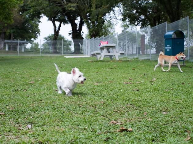 Sembawang Dog Run