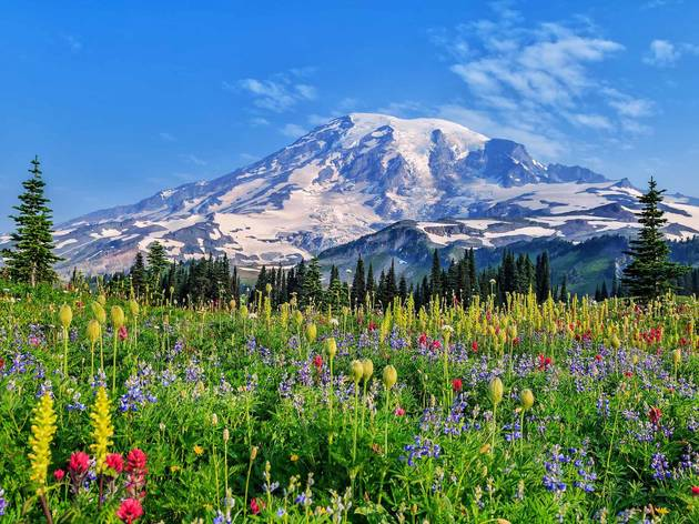 Wildflowers at Mount Rainier National Park