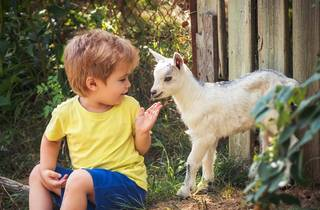Petting Zoo Goat Kids