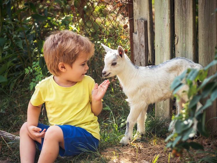 Visit petting zoos in NYC