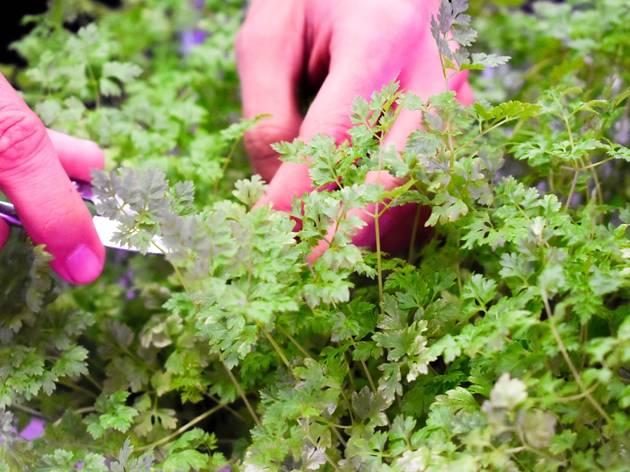 Grow Your Own Microgreens With Edible Garden City