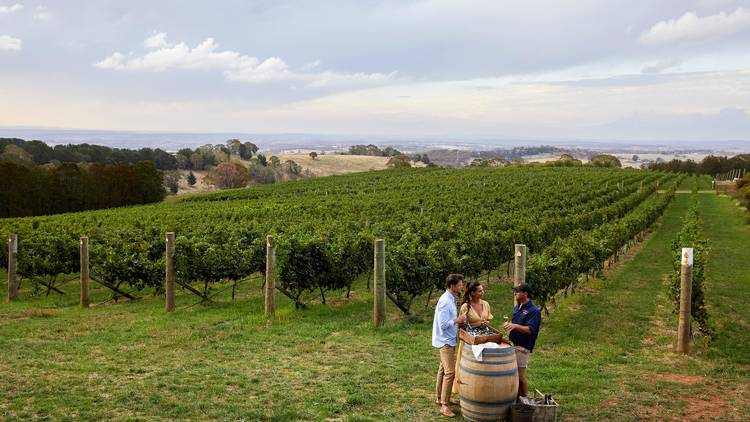 Three people standing in a vineyard around a barrel