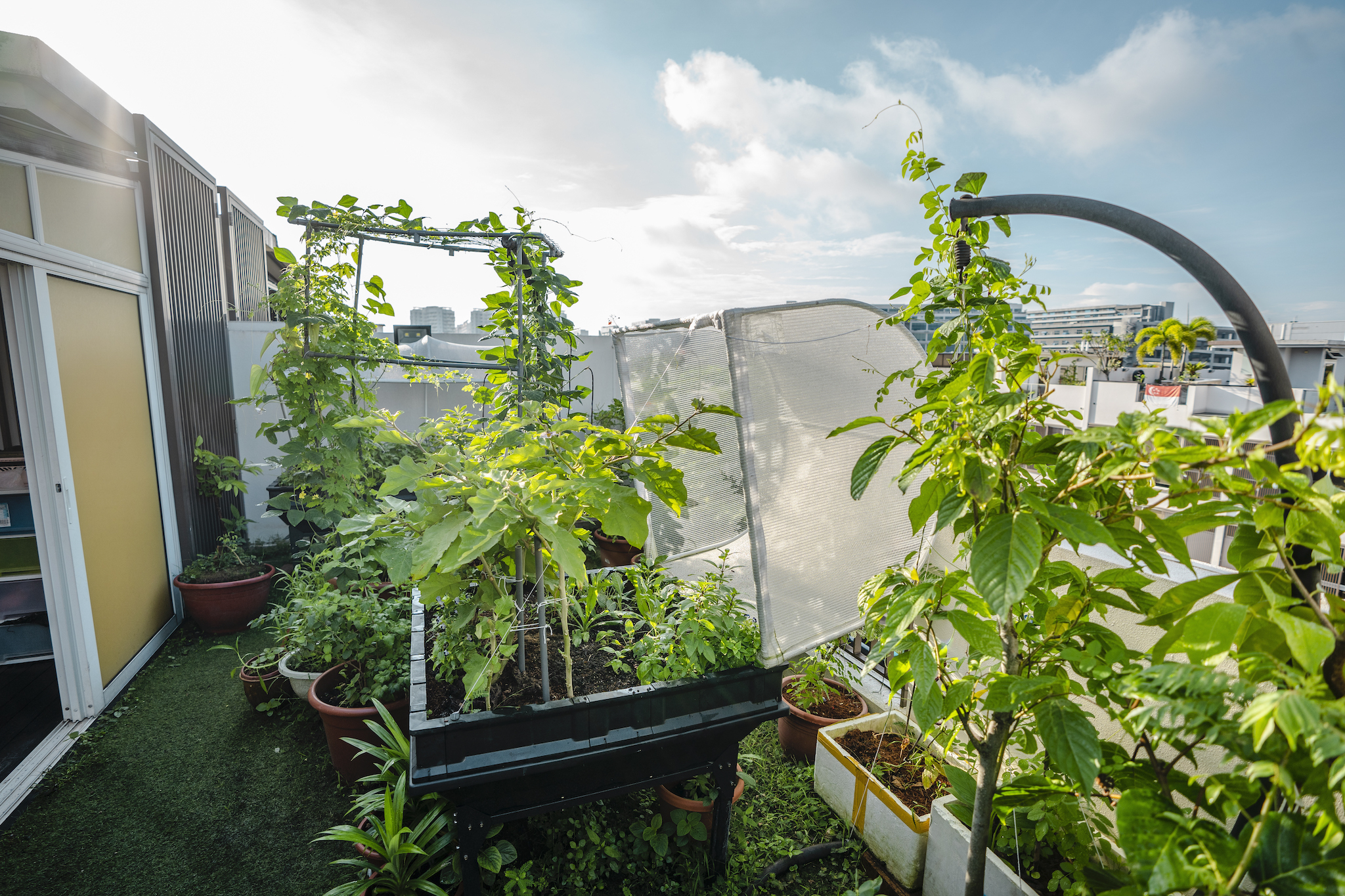 Joanna's rooftop garden