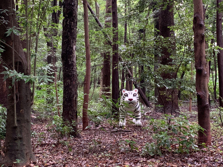 Meiji Jingu Forest