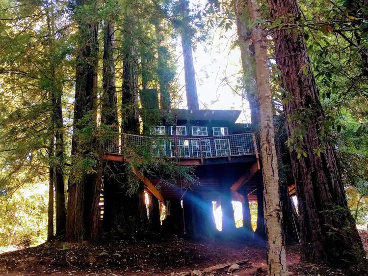 Romantic Treehouse in the Redwoods (Santa Cruz)