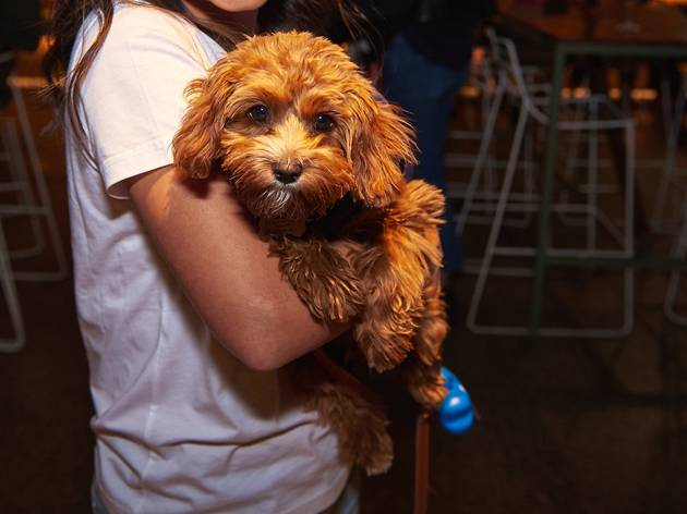 A woman holding a cavoodle