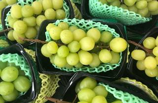 Japanese grapes - stock photo
