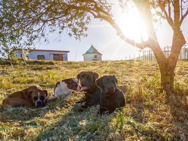 Hotel para Cães, Creche para Cães, Cão do Moinho