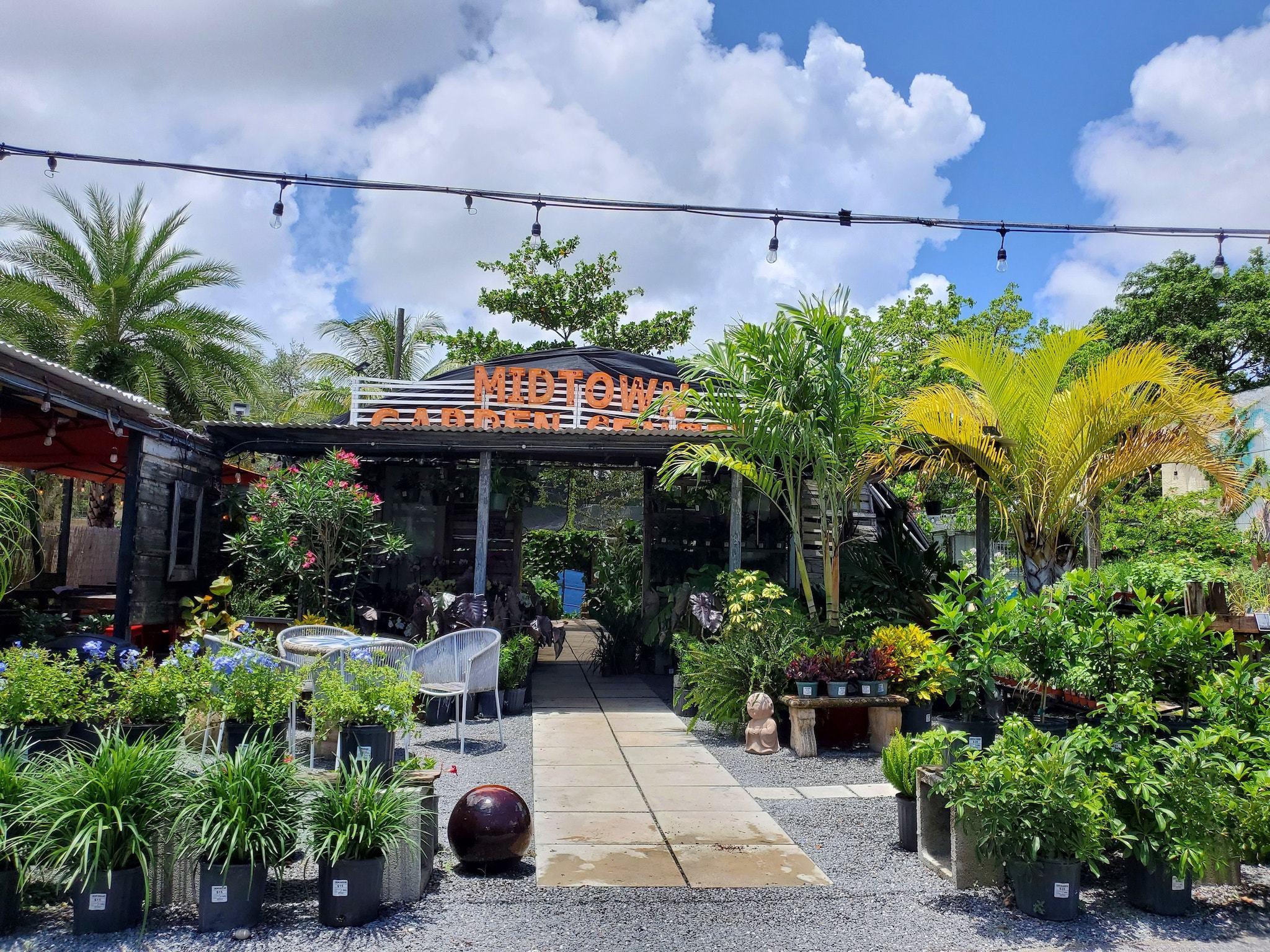 Plants In Miami Right