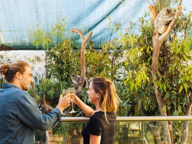 People standing with champagne in front of a koala enclosure