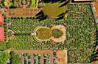 Dole Plantation Pineapple Maze