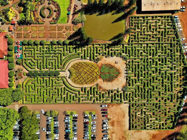 Dole Plantation Pineapple Maze | Oahu, HI