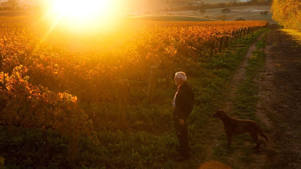 Man standing in a vineyard in sun