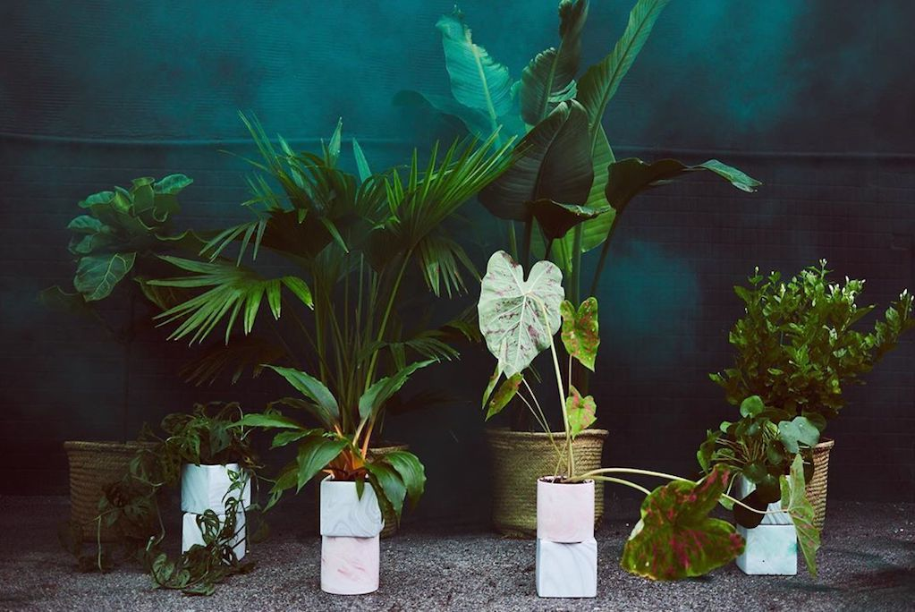 Apollo Plants