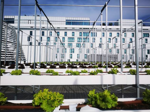 The world's largest urban farm has opened on a rooftop in Paris