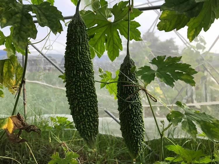 歐羅有機農場:有機蔬菜