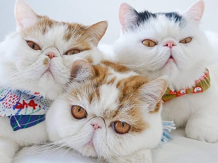Cutest Hong Kong cats to follow on Instagram