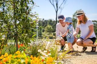 Family inspects native plants at Sydney Park