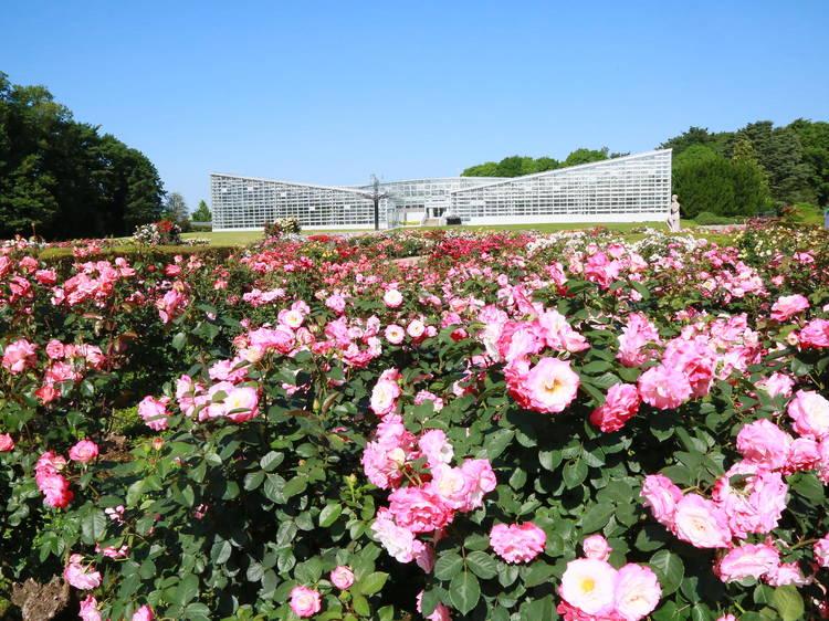 Jindaiji Temple and Botanical Gardens