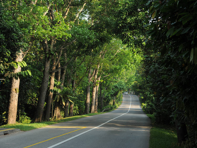 The most scenic driving routes in Singapore
