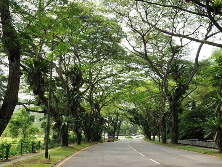 Arcadia Road