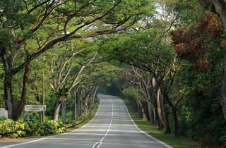 Mandai Road