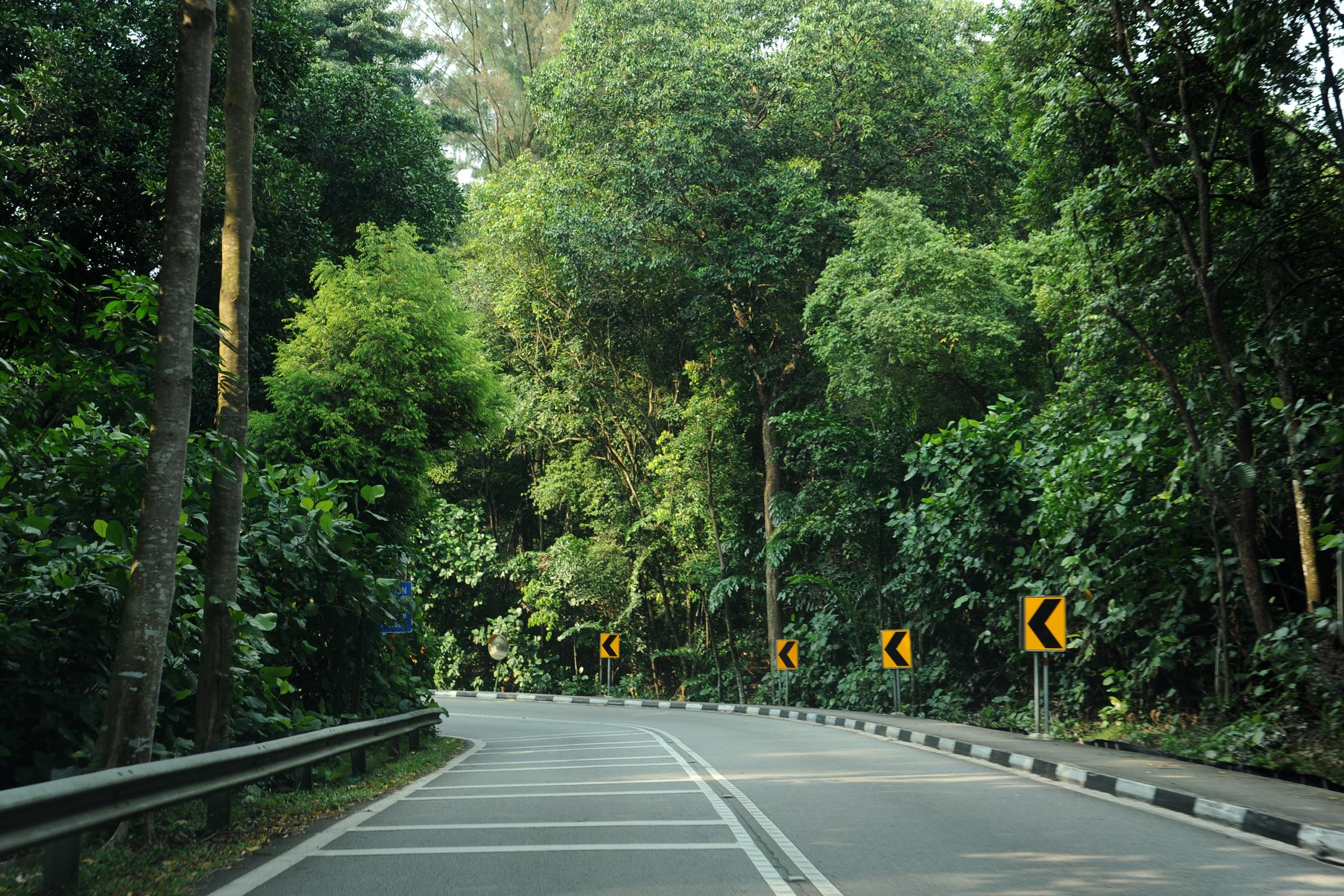 South Buona Vista Road