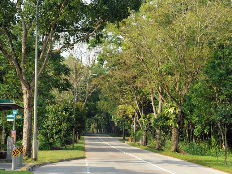 Lim Chu Kang Road