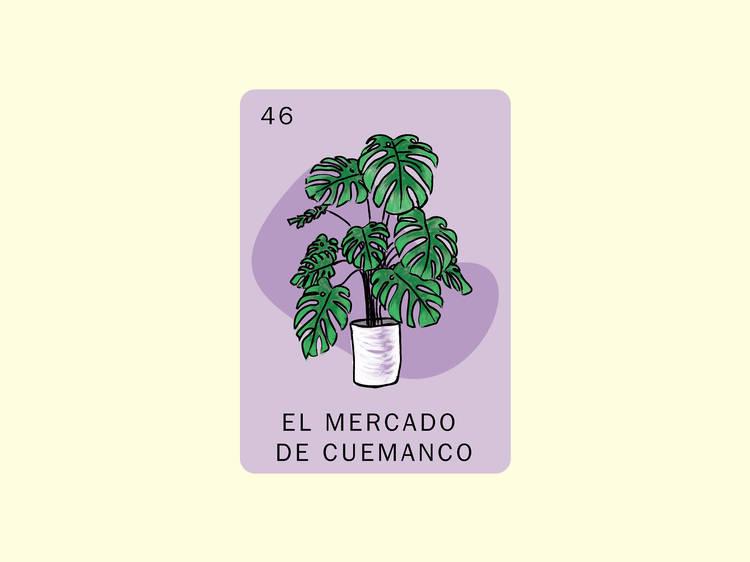 Comprar plantas exóticas en el Mercado de Cuemanco