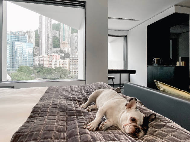 Best pet-friendly hotels in Hong Kong