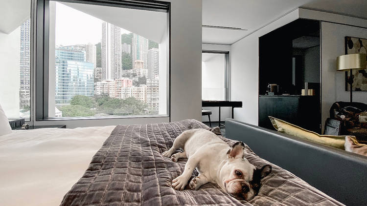 The Murray hong Kong Pawsome Staycation