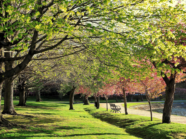Arnold Arboretum, Boston, park