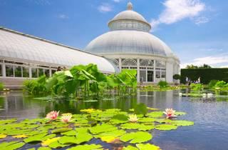 New York Botanical Garden, Bronx, NYC