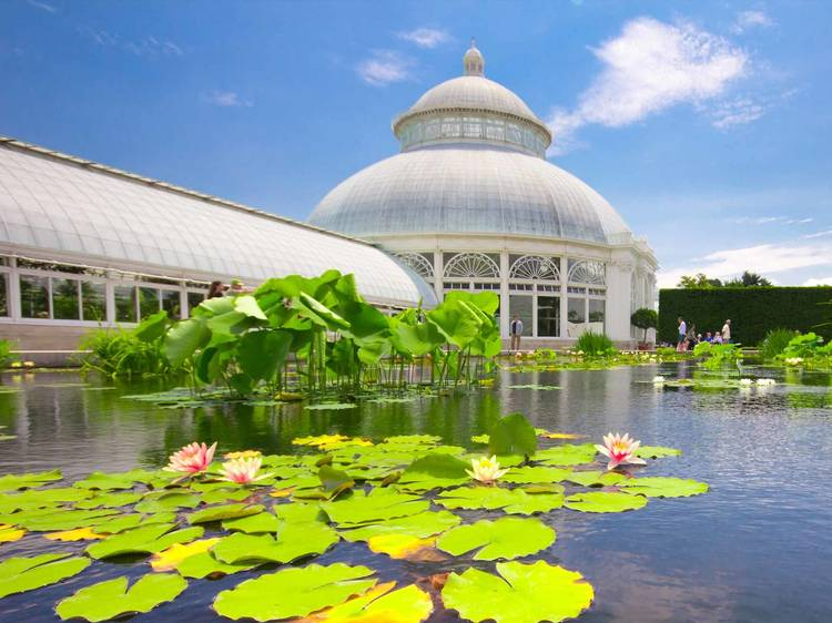 Commune with the flowers at The New York Botanical Garden
