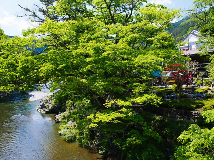 東京、最高の自然を楽しめるスポット