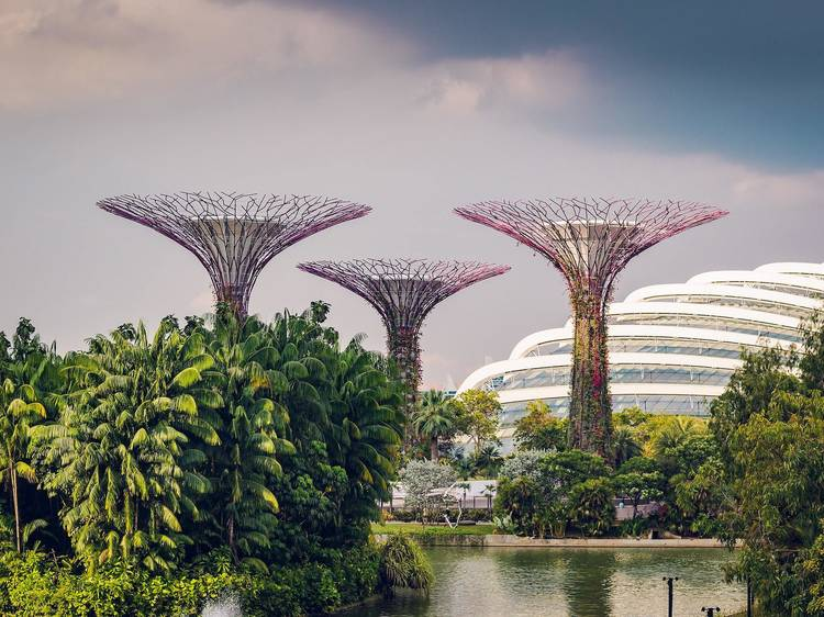 Wander around at Gardens by the Bay
