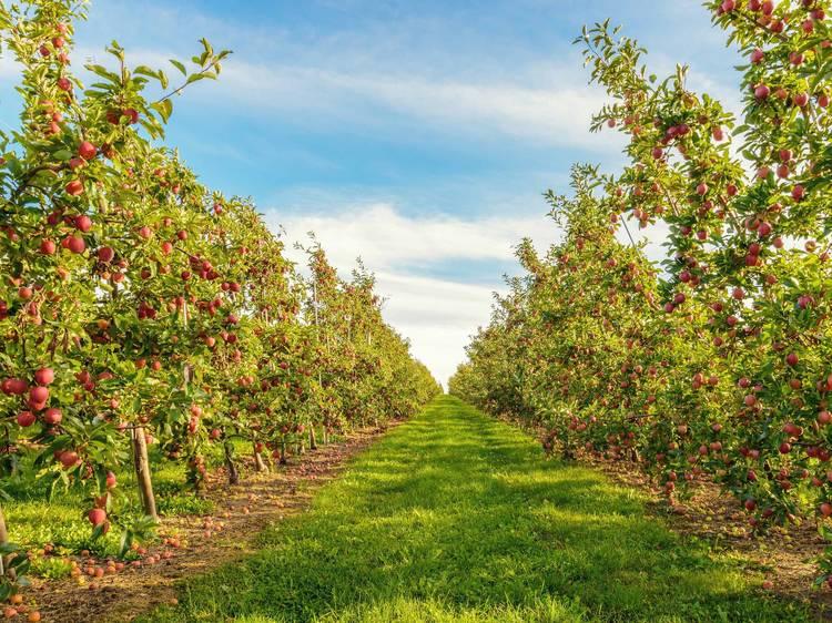 Honey Hill Orchard