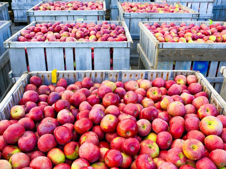 Goebbert's Pumpkin Patch and Apple Orchard