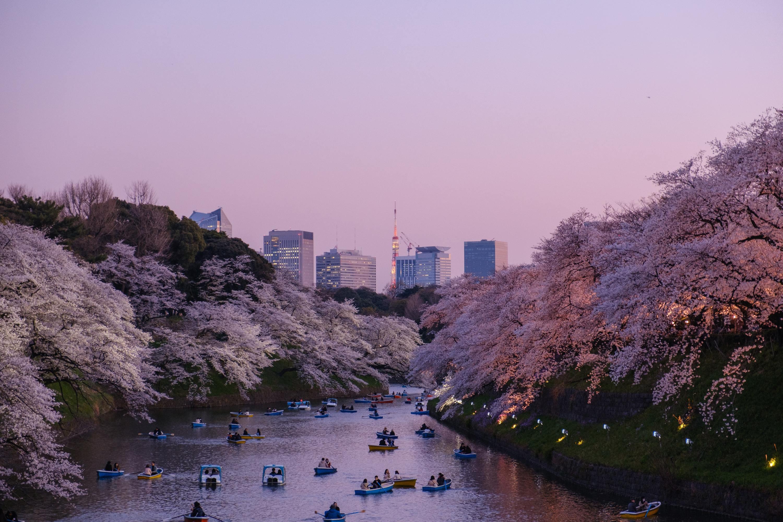 今年も花見は自粛を、「千代田のさくらまつり」開催中止に