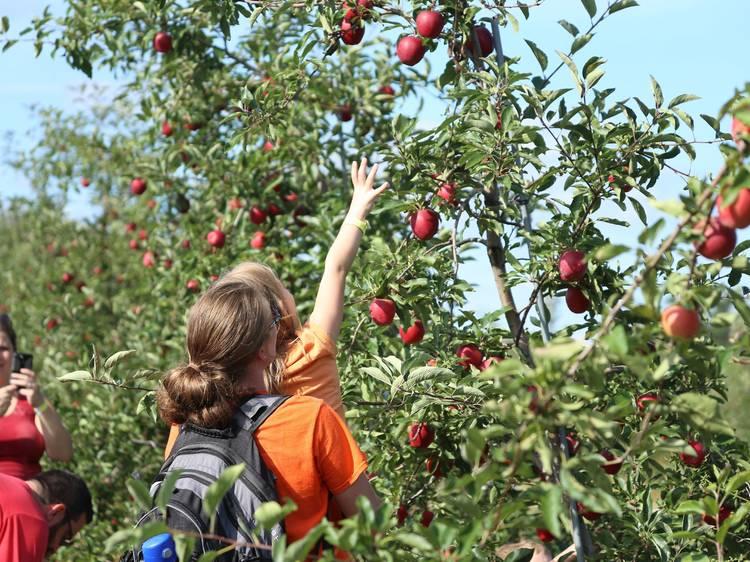 All Seasons Orchard